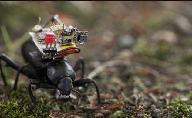 камера на жуке