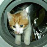 кошка в стиральной машине