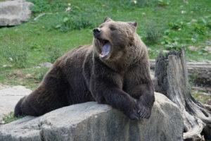 медведь на природе