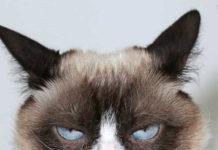 надутый кот
