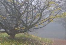 поледние листья ноября